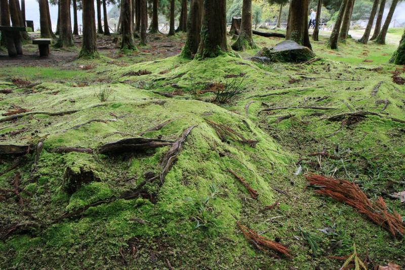 Парк. Долина Фурнаш, отличное место для зелени. Азорские острова, 2015