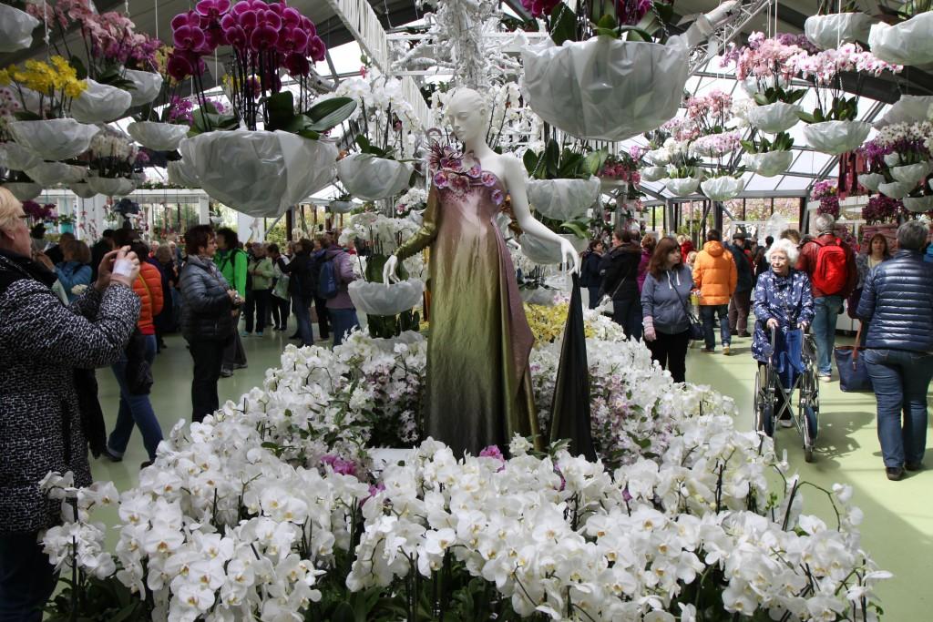 Оранжерея с орхидеями - Biatrix