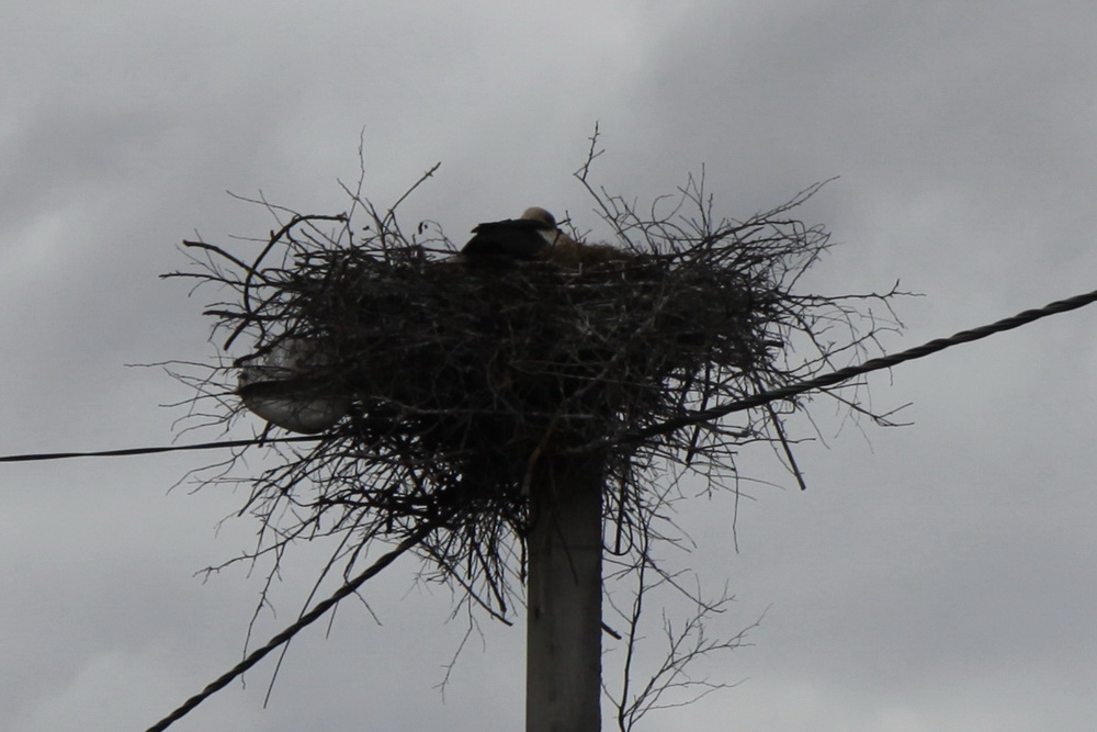 Гнезда. Белоруссия